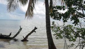 tour isla tamalcab